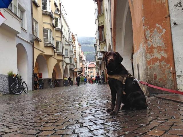 (W)oef! Vacanceselect start 'glampingvakantie met honden'