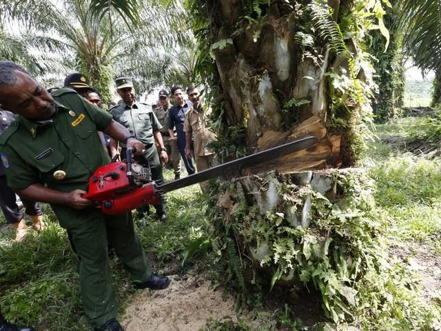 Maak einde aan geïmporteerde ontbossing