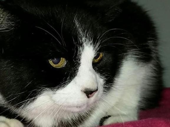 Vermiste kat na 12 jaar weer herenigd met haar baasje