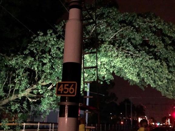 Geen treinen vanwege omgevallen bomen op het spoor