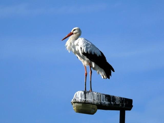 Jagers tellen op hun manier ook vogels, vindt de maker van de Vogelatlas
