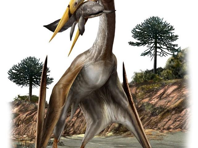 Pterosaurus kon vliegen dankzij de spaken in zijn belachelijke nek