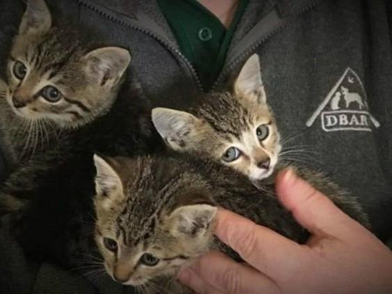 Eindhovense kittens overleven reis van 500 kilometer in motorblok, Engelsen doneren massaal geld