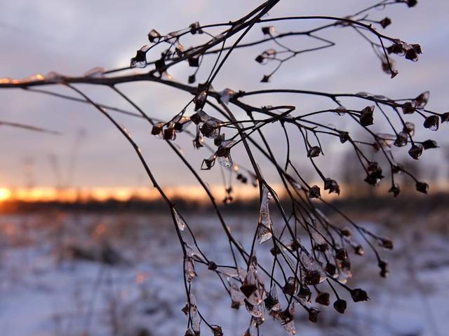 Guur weer en sneeuw op komst: 'Begin van de week is het bijna winter'