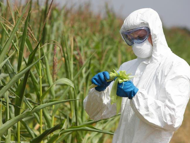 Europees verbod op insecticide chloorpyrifos