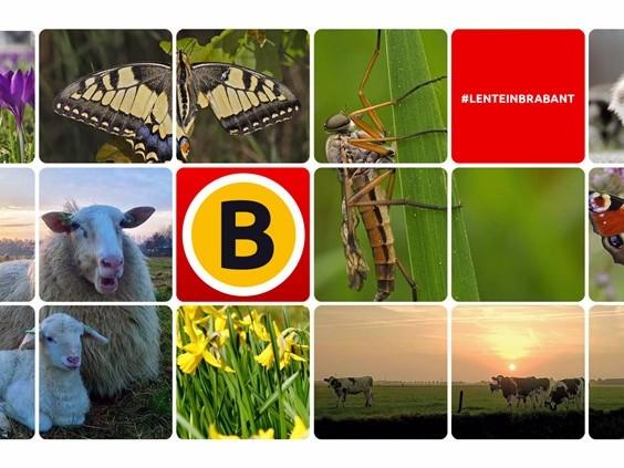 Wie maakt de mooiste lentefoto van Brabant?