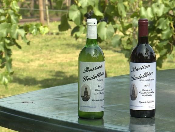 Wijnboer Sjaak is lyrisch over zijn druiven: 'We stevenen af op een uitmuntend wijnjaar'