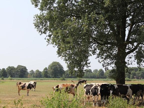 Grondwateronttrekkingsverbod voor Twente en delen van Salland