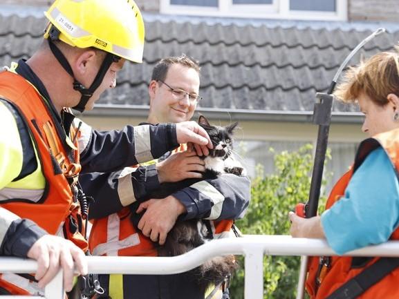 Kat van dak gehaald in Sambeek, bewoners op vakantie, verzorger was even weg