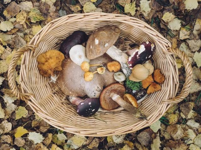 6x de lekkerste paddenstoelen voor je herfstgerechten op een rijtje