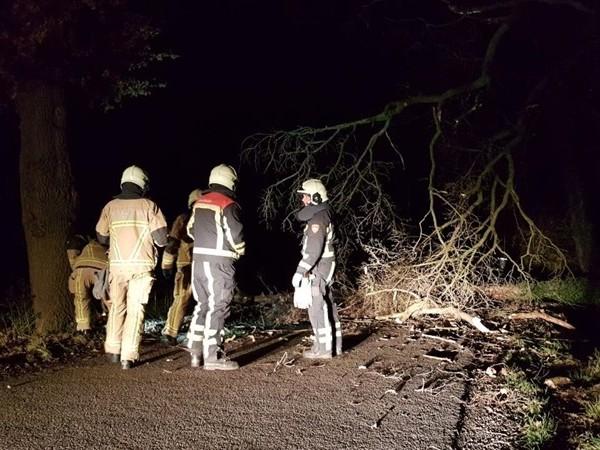Boom naar de grond in Hengelo door onstuimige nacht