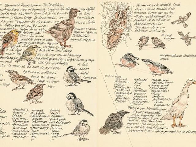 Het 'Vogeldagboek' van Peter Vos