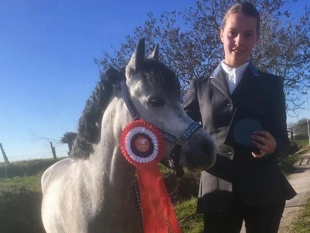 DK West: Welsh A stermerrie Surprise reservekampioen mendressuur