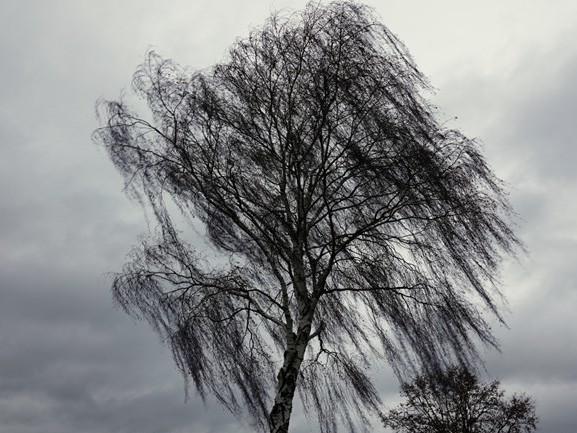 Ook maandag regen en stevige wind verwacht: 'Je ziet pas een afnemende trend vanaf dinsdag'