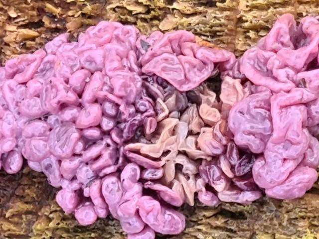 Hersenen zijn dit niet, maar wat is het wel? Frans Kapteijns geeft antwoord op vragen in Stuifm@il