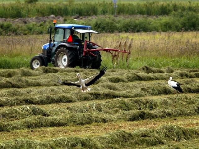 De boer hoort niet in de beklaagdenbank