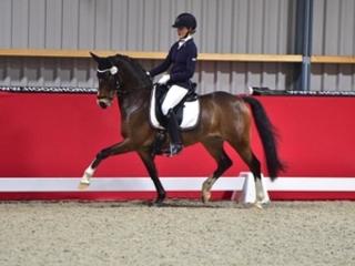 Topprijzen voor Welsh-pony's op Elite Dressage Pony Sales