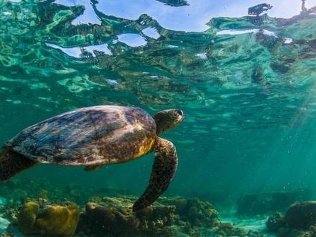 Australië: 1,3 miljoen euro voor redden koraal