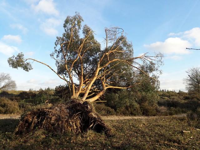 Stormlopen op de zwaar getroffen Holterberg