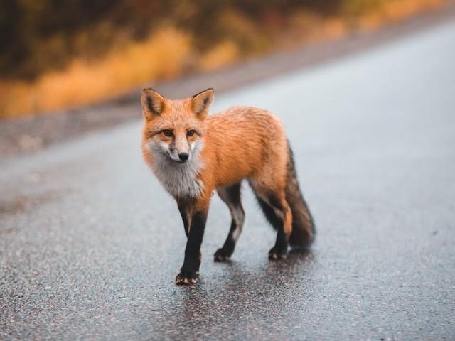 Vijf dieren die je niet verwacht in de stad, maar er wel ziet