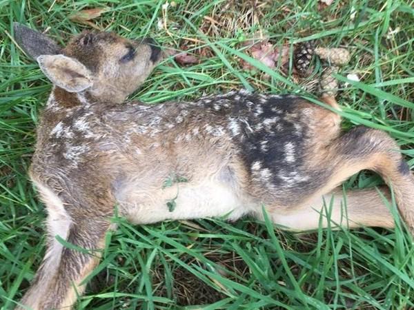 Reekalf doodgebeten door loslopende hond op De Sprengenberg