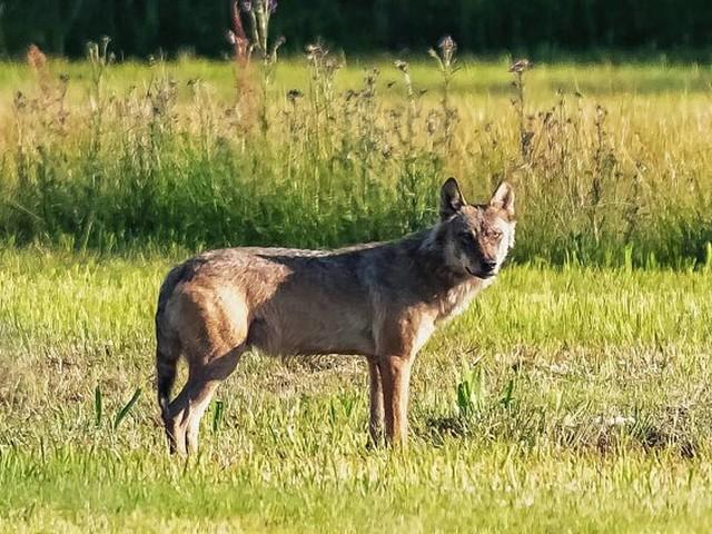 Een wasbeer? Ook deze bijzondere dieren liepen of kropen in Brabant rond