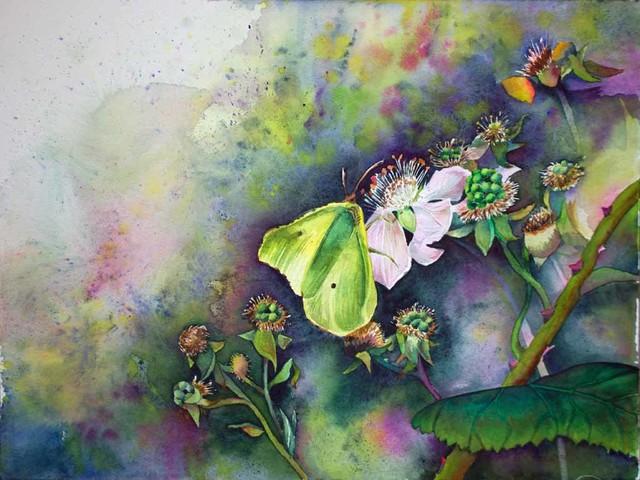 Brombeerblüten sind ein Paradies für Schmetterlinge und andere Insekten