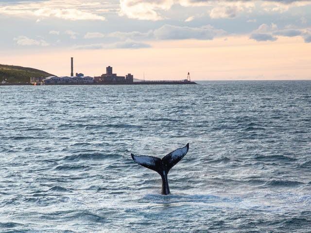 'Walvissen gebruiken geen anticonceptie, hun populatie groeit. Ik zorg voor balans'