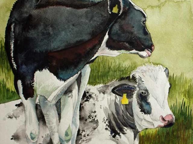 Schwarzbunte Kühe – Aquarell von Frank Koebsch