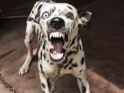 People Ain't Isht: Racist British Soup Cookie Trains Dog To Attack Pakistani Store Owner