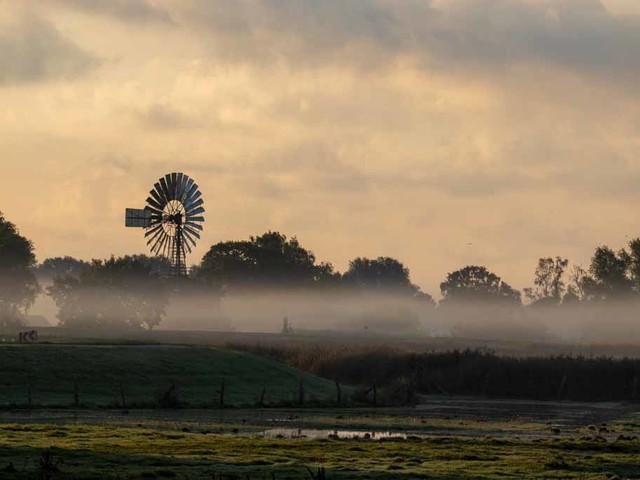 Nebel auf den Wiesen des Mönchguts