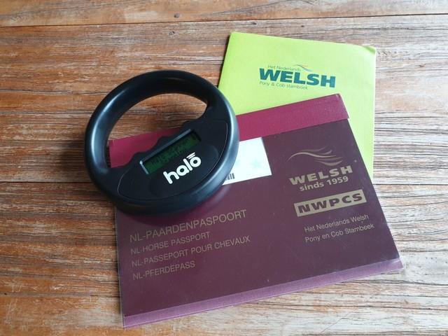 I&R: Welsh-pony's koppelen aan UBN in meeste gevallen nu mogelijk