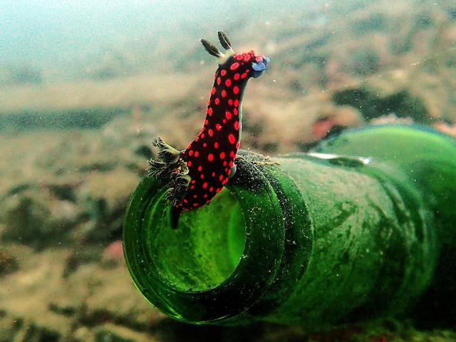 Sulawesi, nog een (vrijwel) onontdekte parel in de gordel van Smaragd