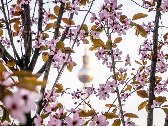 Berlijn in 30 lentefoto's