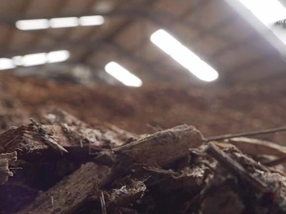 Milieuactiegroep voert in Zwolle actie tegen bouw van biomassacentrale
