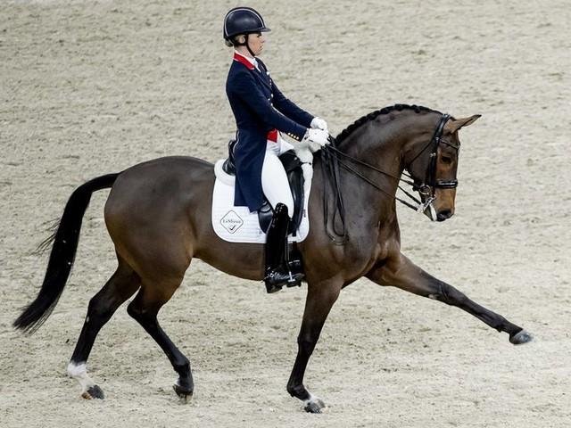 Paardensport worstelt met kritiek: lijden de dieren niet?