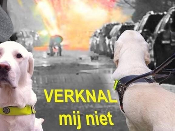 Hulphonden 'gericht' bekogeld met vuurwerk, schrijft hondenschool op Facebook