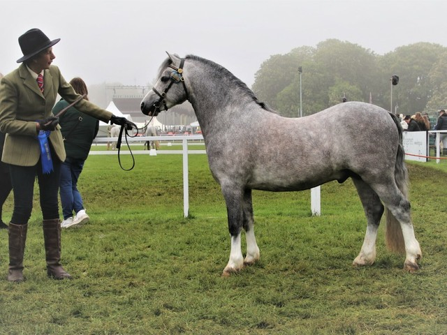 Uiterwaarden Expression tweede op Royal Windsor Horse Show