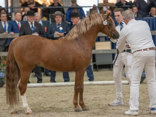 Sectie B-hengst Paddock Lorenzo in 2020 op Stal Prinsenhof