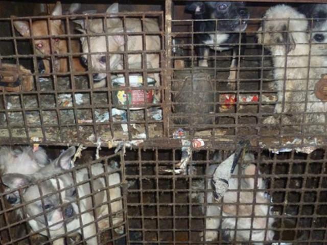 Ruim 200 honden bevrijd in Tsjechië