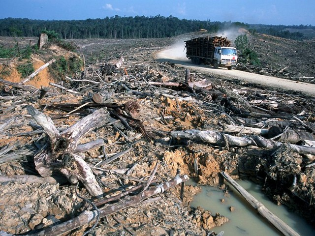 'Palmolie niet de grote boosdoener'