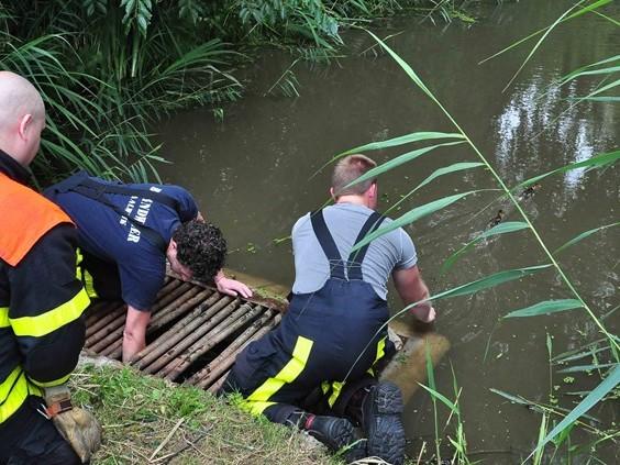 Zes eendjes vast in Waalwijk, brandweer schiet te hulp