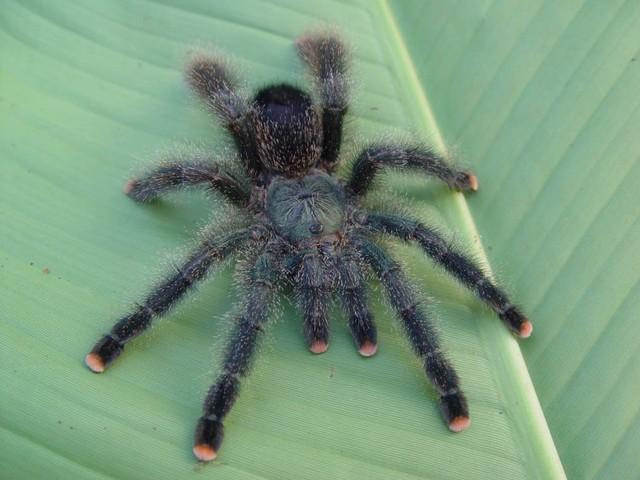 Kom een spin aaien in Midden-Delfland