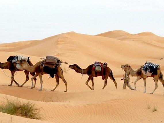 'Nederlandse toerist mijdt Afrikaanse noordkust'