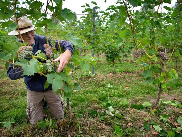 Deze wijnboeren willen dat Nederland een voorbeeldland wordt voor 'schone wijn'