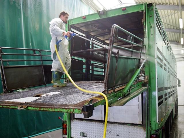 Roemenië ruimt megastal met 140.000 varkens wegens Afrikaanse varkenspest
