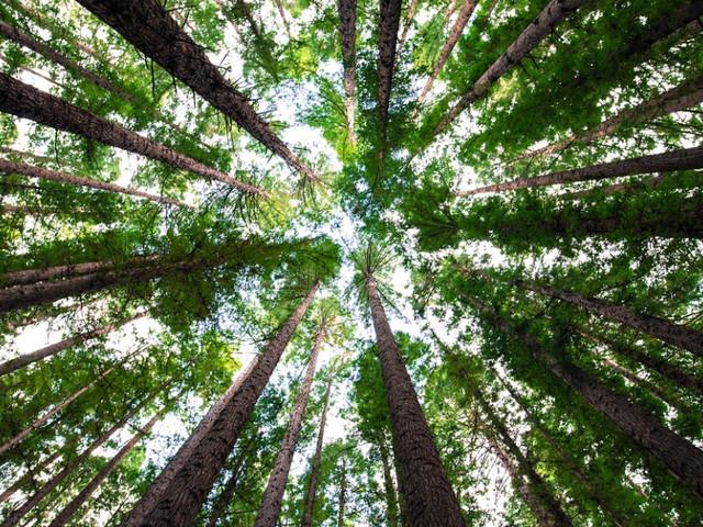 WNF: zet handelsdeal in om regenwoud te redden