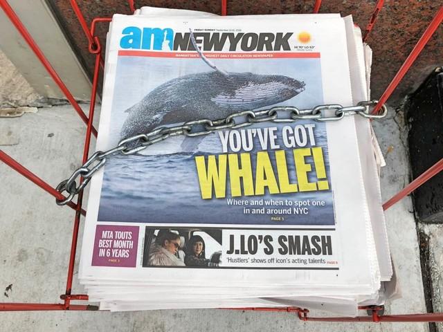 Walvissen kijken voor kust van New York? Ja dat kan!