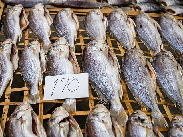 Prijzen voor Schotse vis onderuit door grensgedoe brexit