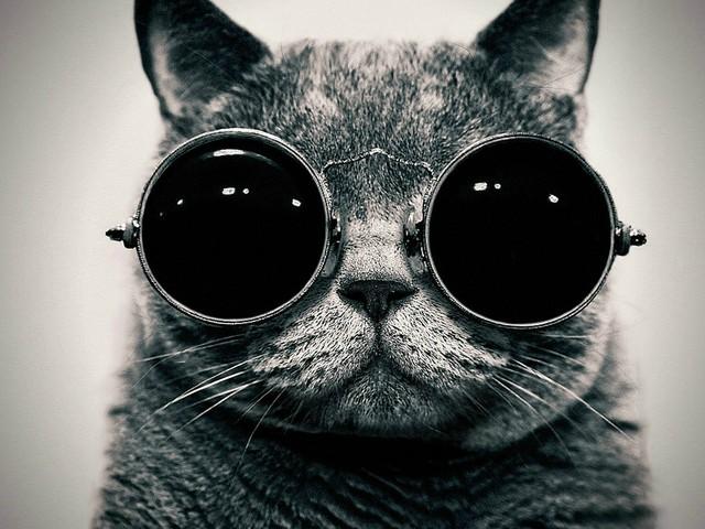KGB kontra kot z CIA. Co stało się z kotem, który miał podsłuchiwać rosyjskich dyplomatów?
